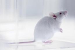 La edición del ARN repara una mutación causante del síndrome de Rett en ratones