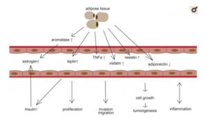 Cáncer de endometrio